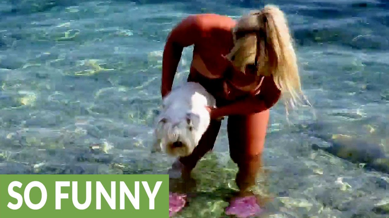 Puppy eager for ocean air swims above water