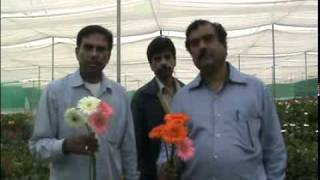 Floriculture Unit visit by Narasimha Murthy - Gopal Parvati - Mohana Rao - Umesh.mp4
