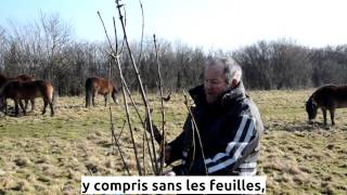 Ted Green - Tree Hay, l'arbre comme fourrage