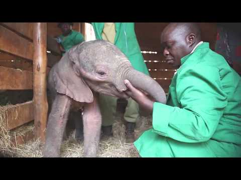 Rescuing An Orphaned Elephant
