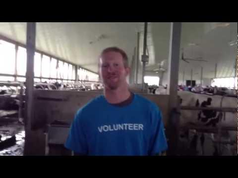 COW | Dairy | Mount Kolb Farm - Paul and Marion Kolb Caledon