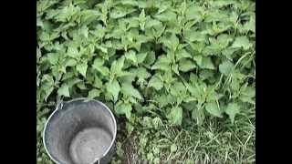 Repeat youtube video 3 astuces pour fabriquer du purin d'ortie sans odeur