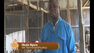 Expert Guide: Key to poultry farming success – part 1