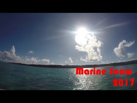Marine Snow PV