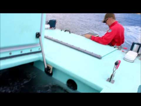 FISH STOCK GORGE TANK FULL 2016