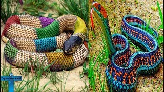 Top 10  Most Beautiful & Colorful Large Snakes In The World For Pet