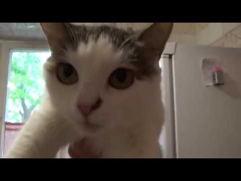 Моника мамина кошка (опухоль)