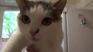 Моника - мамина кошка (опухоль)