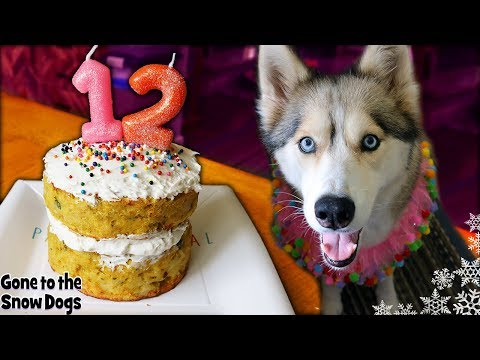How To Make a Dog Birthday Cake with Meat | DIY Dog Treats 122