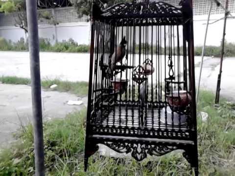 นกป่าละอู@เพลงยาวๆ