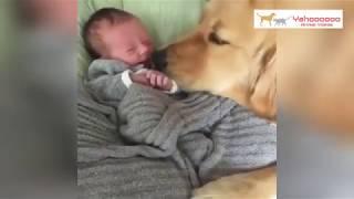 世界で最も愛されている犬種?🐶レトリバー。癒されるかわいいおもしろい瞬間