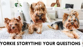 Yorkie Storytime | your questions answered