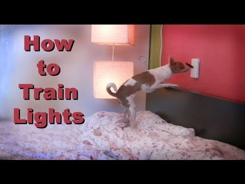 The most amazing dog trick- turn the lights on and off