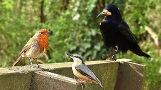 Video for Cats to Watch - Birds on The Park Bench