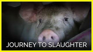 Journey To Slaughter