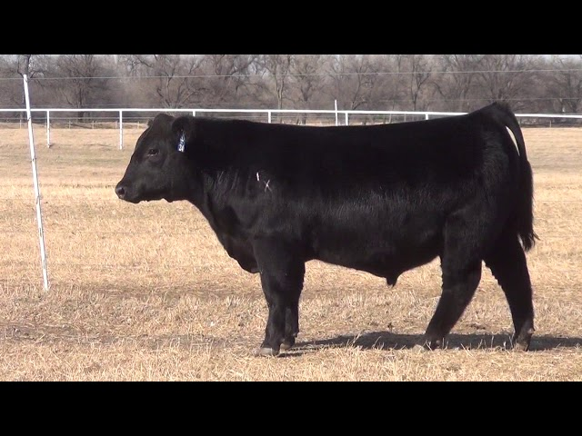 Express Ranches Lot 24