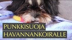 Lakulle (havannankoira) punkkisuoja: koiralle punkkipanta