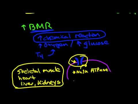 Thyroid Physiology And Pathophysiology
