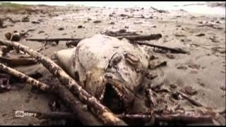 Schulfilm-DVD: Umweltkatastrophe - Bedrohte Paradiese: Der Golf von Mexiko (DVD / Vorschau)