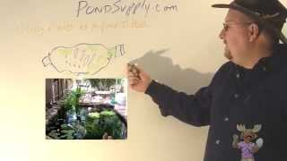Using Pond Plants To Keep Your Pond Clean