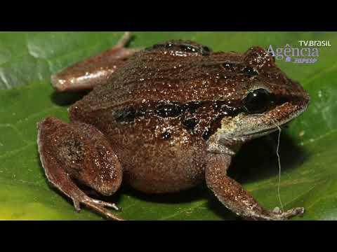 Pesquisadores Da USP Encontram Novas Espécies De Animais Na Amazônia