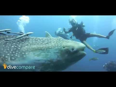 Diving Koh Tao, Thailand - Marine Life | Dive Compare