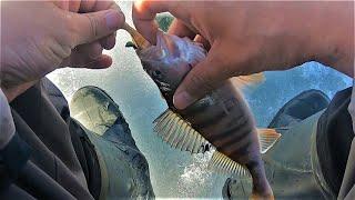 СМОТРИ СМОТРИ КОГО ОН СЪЕЛ! Рыбалка по ПОСЛЕДНЕМУ ЛЬДУ приносит СЮРПРИЗЫ!