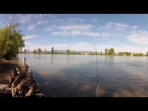 Lake Trout Fishing From Shore On Flathead River And Swan River W/ Accidental Bass!