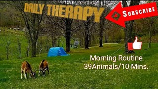 Morning Routine with my 39 Animals in Ten Minutes