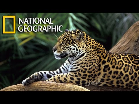 Wild Amazon Documentary HD
