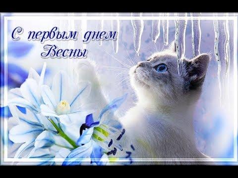 Красивое поздравление с ПЕРВЫМ днем весны 1 Марта День Кошек Day Cat День котов