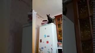 Смешной кот на холодильнике