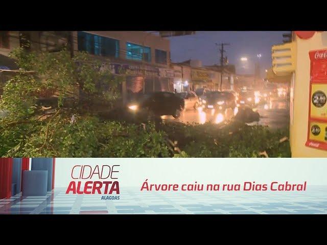 Árvore caiu na rua Dias Cabral, no centro de Maceió