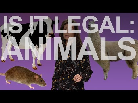 Animals | Is It Legal? | 22 Minutes