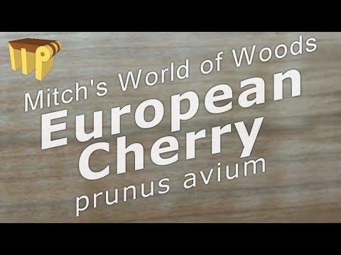 European Cherry (prunus Avium) - Mitch's World Of Woods