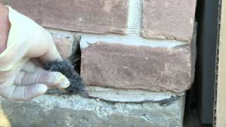 How to Stop Mice Rats Spiders Insects From Entering Your Home