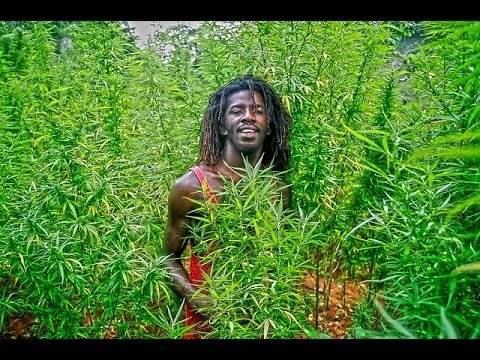 [Documentary 2017] - JAMAICA CANNABIS  - Full Documentary HD