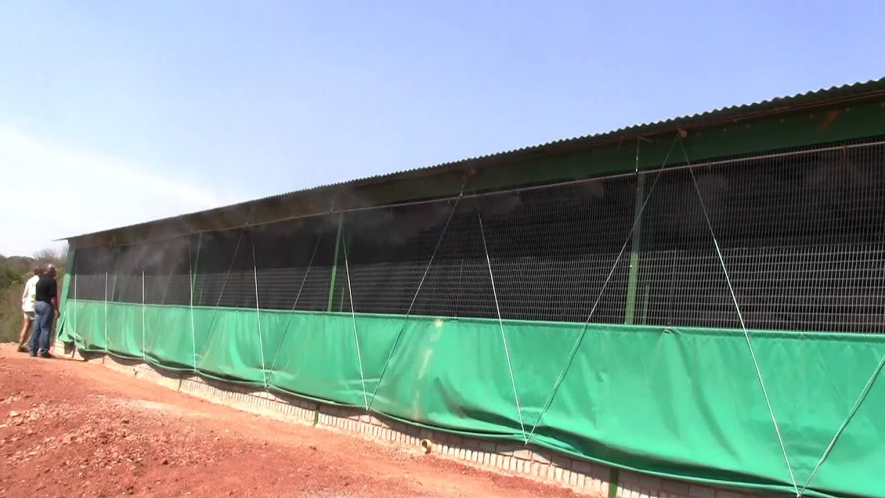 Misting System in a chicken house
