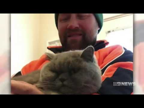 Cat Reunion | 9 News Perth