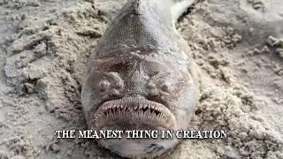 9 Kleine Fische, die einen großen Schaden anrichten können!