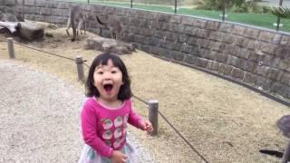 神奈川県の金沢八景にある金沢動物園はカンガルーのエリアに入って触れ...