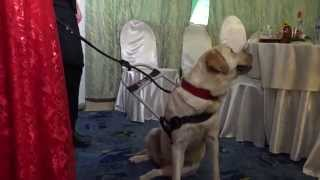 Юлия Дьякова вместе с найденной собакой-поводырем на Празднике в Клубе Героев