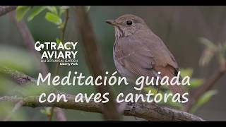 Bird Song Meditation: Español