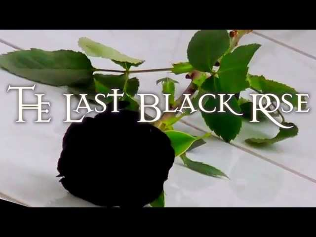 The Saint Paul - The Last Black Rose