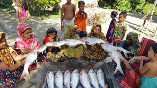 Tasty Fish Curry - Big Size Silver Carp Fish Cutting & Cooking By women For Whole Village Peoples