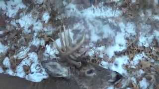 Wisconsin Gun Deer Hunting 2014, Opening Day 8 Pointer