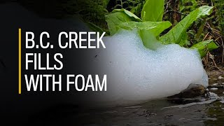 B.C. creek fills with foam after detergent used to fight moss on rooftops