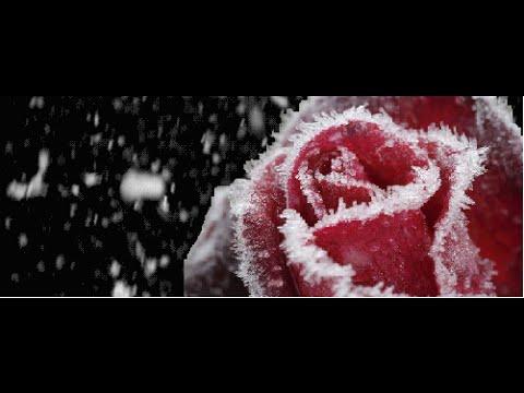 Download Vampire Academy 2 - Frostbite