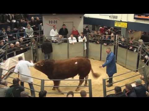 British Limousin Record Breaking Sale @H&H Carlisle (top ten prices) 17/10/15
