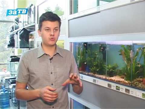 Как вырастить креветок в аквариуме